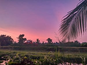 Gorgeous picture of the sun setting over a Sri Lankan field