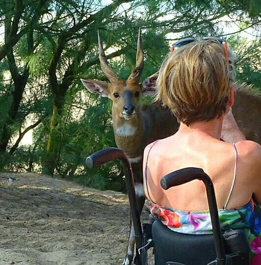 Picture of person in a wheelchair getting close to African nature