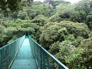 Picture of a hanging bridge in the jungles of Costa Rica