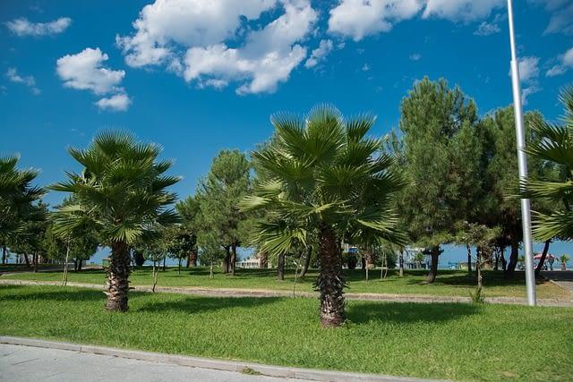 georgia-palm trees batumi tbilisi