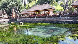 The Tirta Empul temple sits serenely amidst the trees