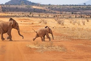 Picture of baby elephants playing in the African wilds